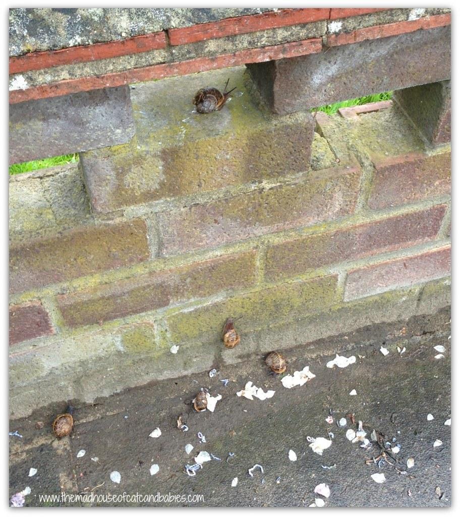 Snails for blog
