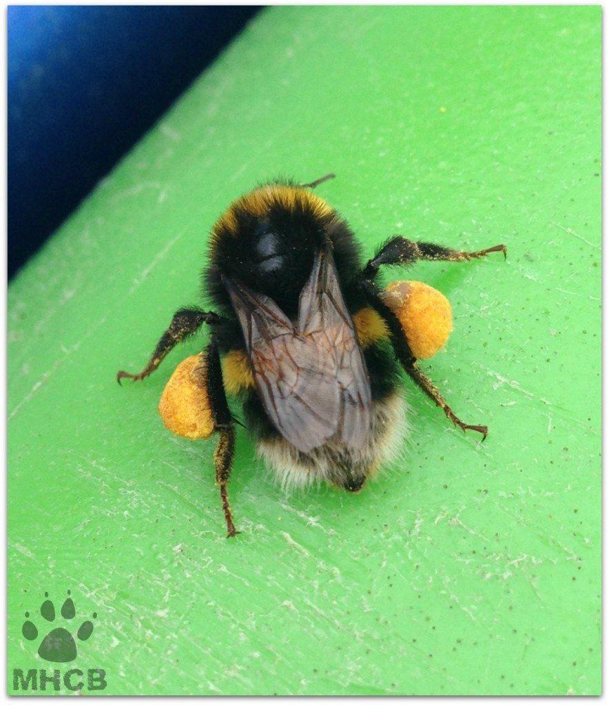 BeesilentSunday