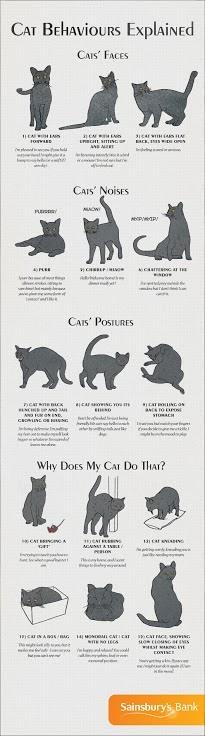 cat_behaviour_explained FINAL