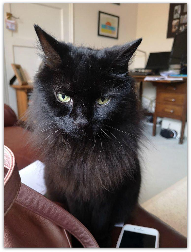 Project 365. Grumpy looking black cat